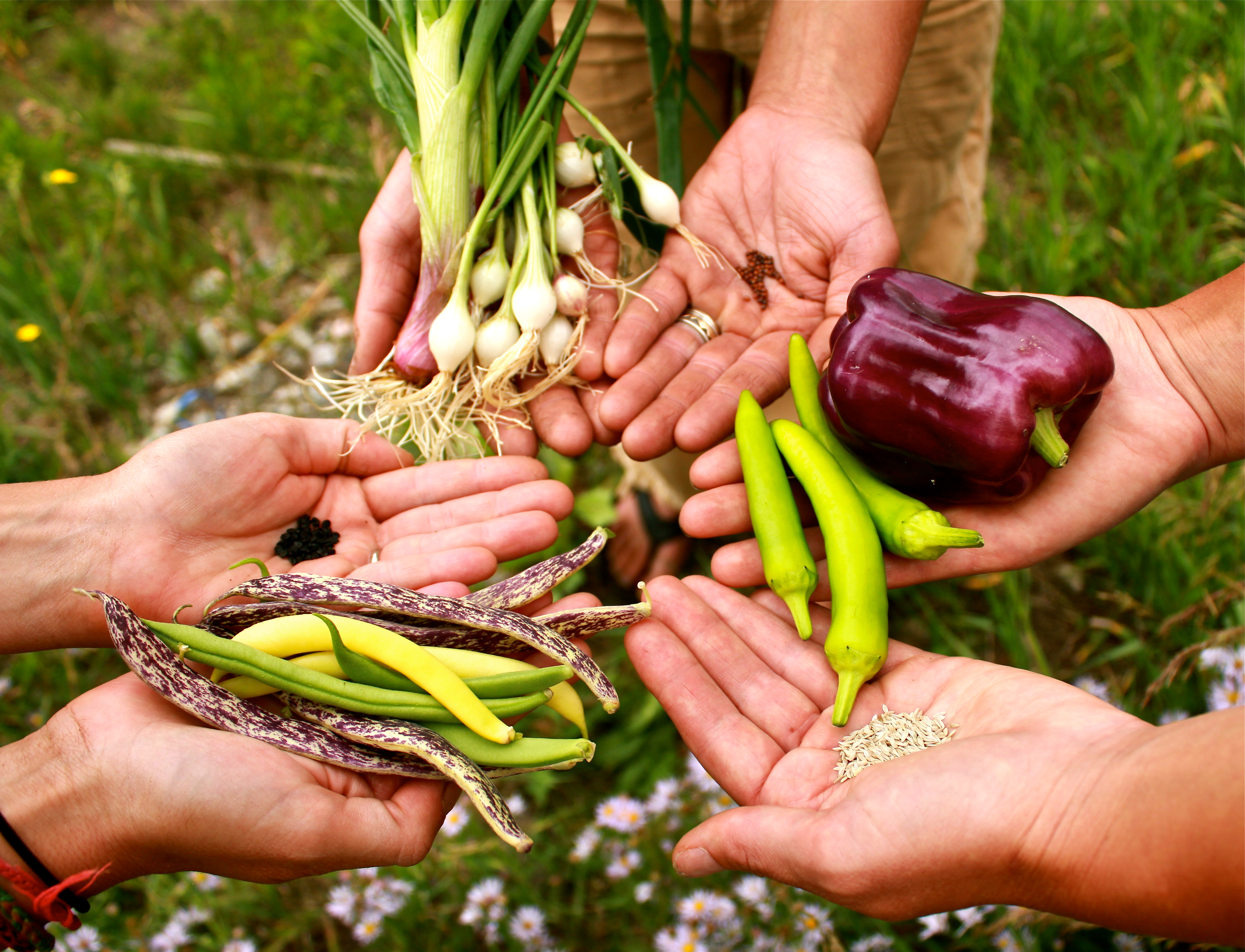PC Launches New Sustainable Agriculture Program